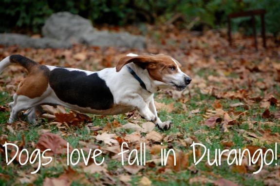 dogs love durango
