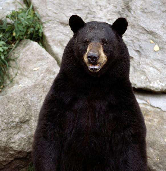 Be Bear Aware Durango Com