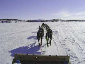 dog sledding at Durango Mountain Resoirt