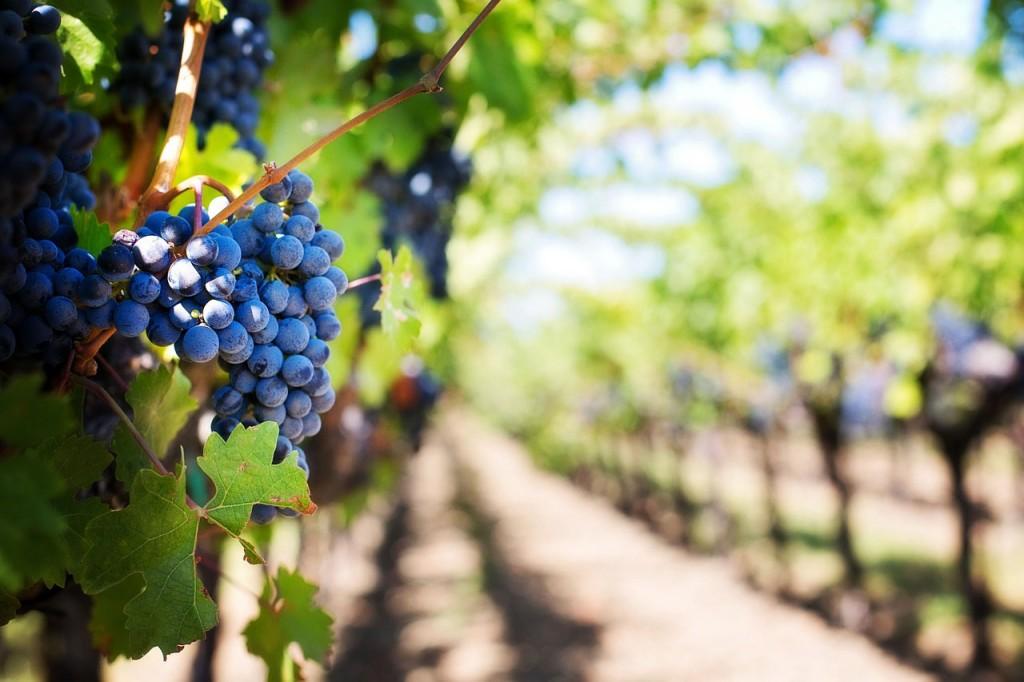 durango wineries