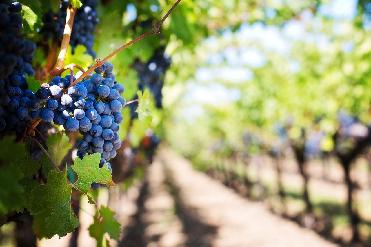 Durango Wineries Amp Vineyards Durango Com