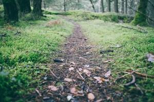 guided-hike-durango
