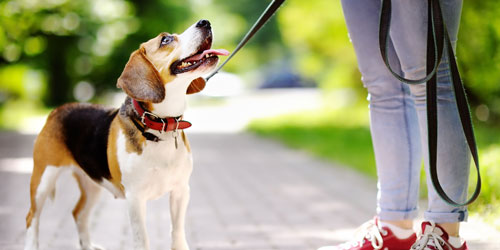 how to find pet friendly hotels on tripadvisor