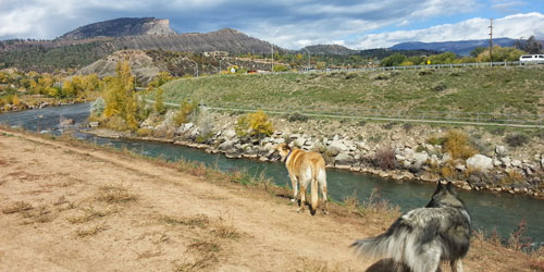 Tips for Traveling With Your Pet in Durango