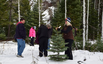 Christmas Tree Train