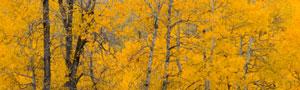 fall-new