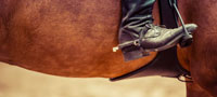 horse-nav