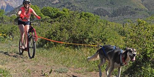 Durango Dog Ranch