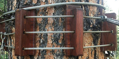 Patented Soaring system secures zip line to tree without causing harm